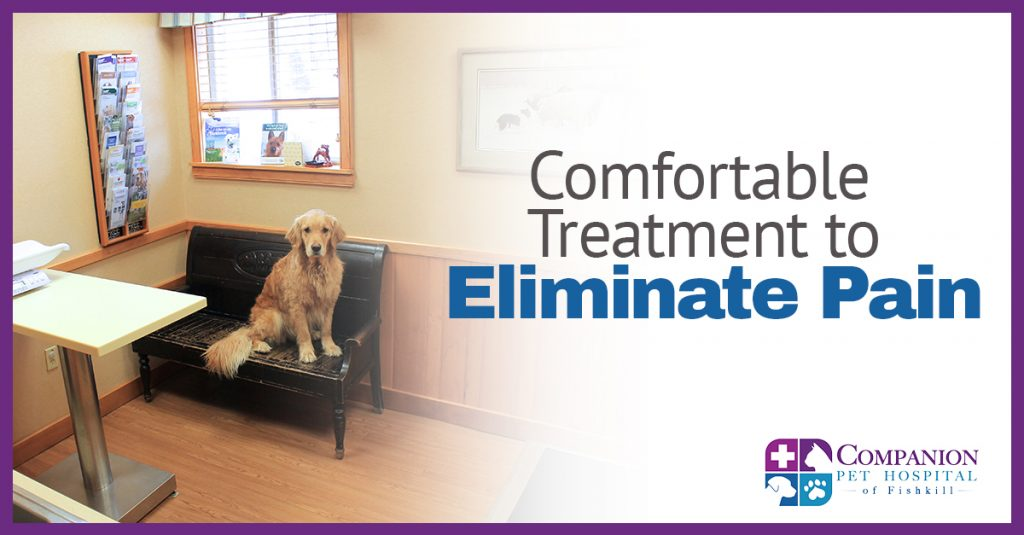 Pain Treatment for Pets in Fishkill, NY